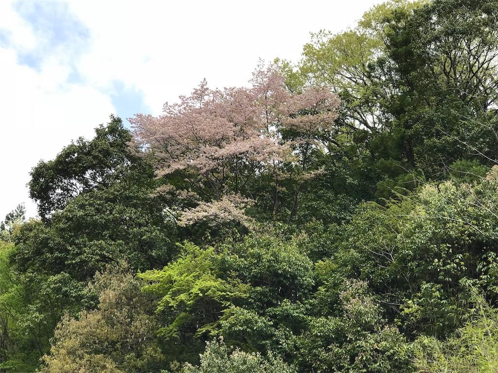 f:id:torakichi7:20180416162125j:image