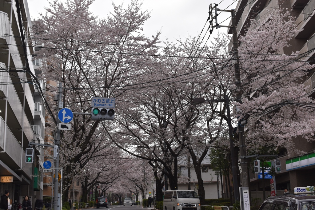 f:id:torakichi7:20190330124742j:plain
