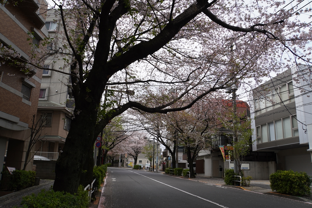 f:id:torakichi7:20200405110042j:plain