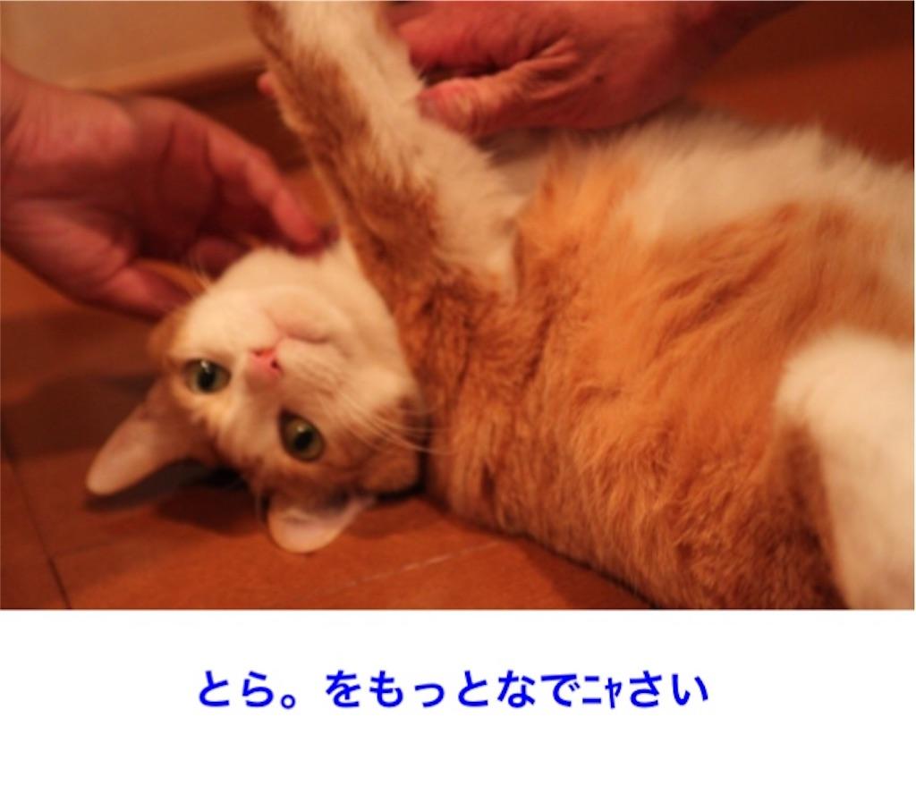 f:id:torakimo:20170610214621j:image