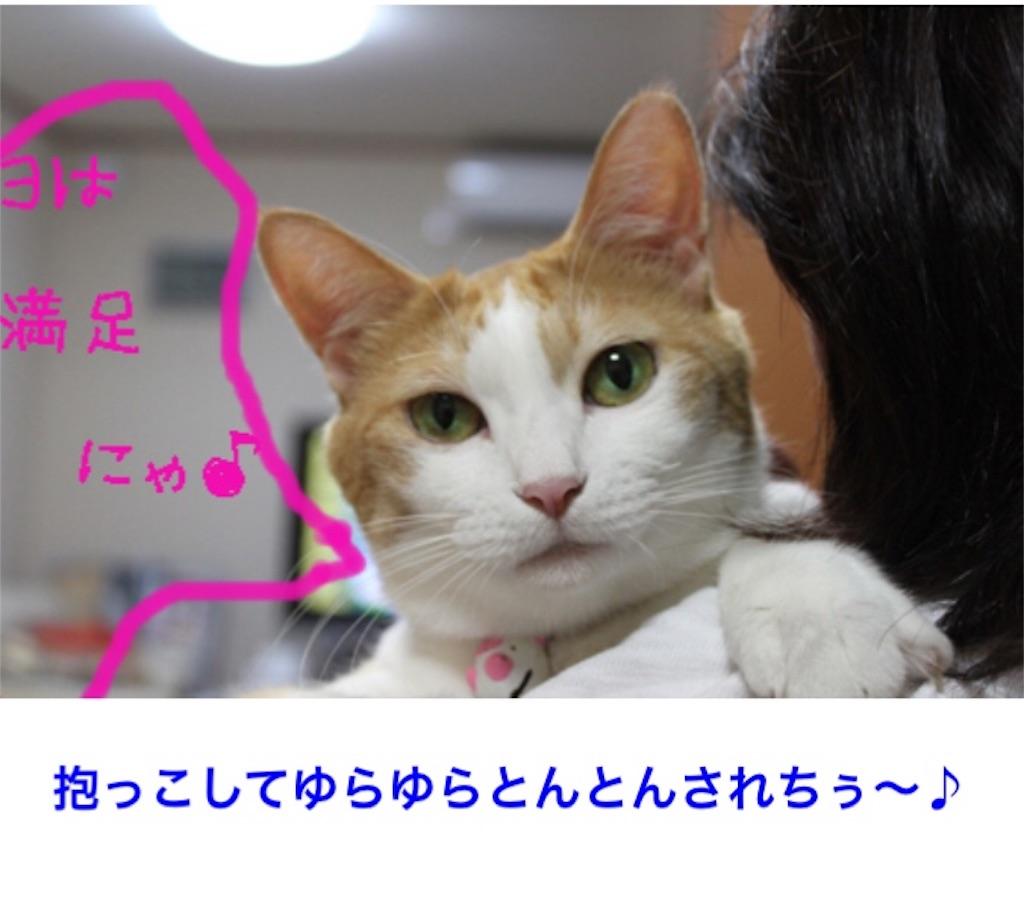 f:id:torakimo:20170627114419j:image