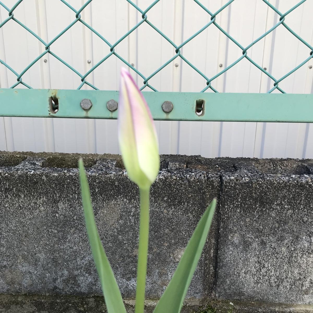 f:id:toramarutan:20190407201859j:plain