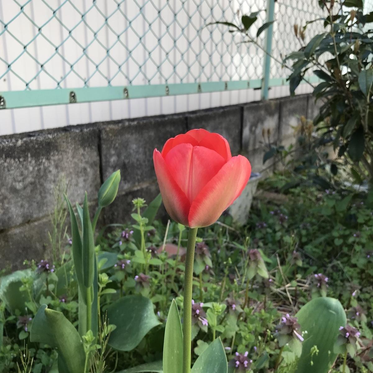 f:id:toramarutan:20190413215413j:plain