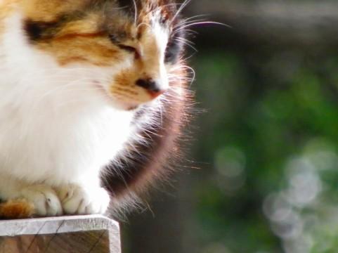 f:id:torazuka:20110722025942j:image