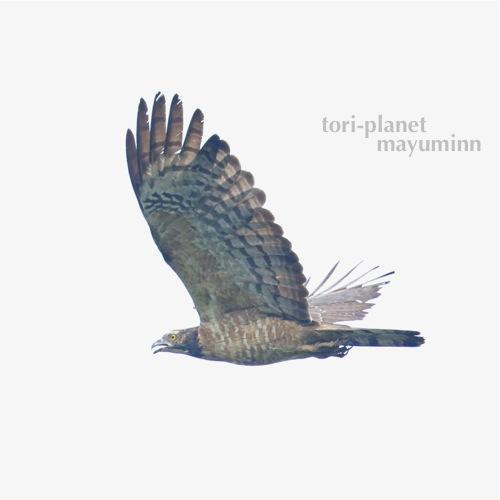 f:id:tori-planet:20160929160833j:plain