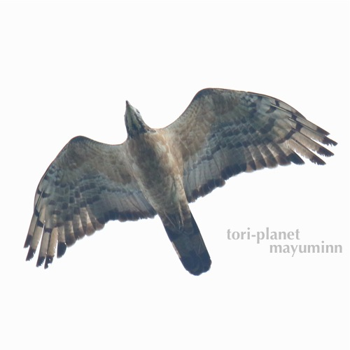 f:id:tori-planet:20160929181507j:plain