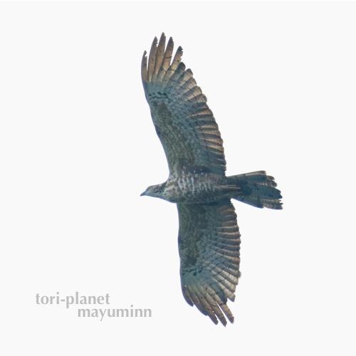 f:id:tori-planet:20160929181745j:plain