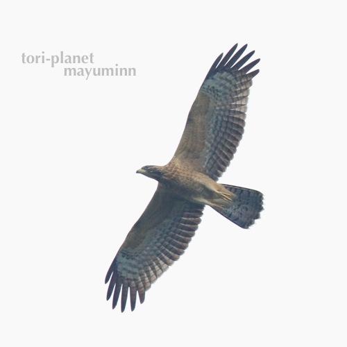 f:id:tori-planet:20160929181807j:plain