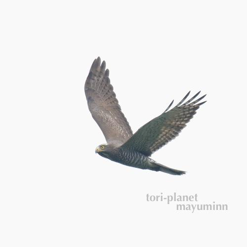 f:id:tori-planet:20161001001320j:plain