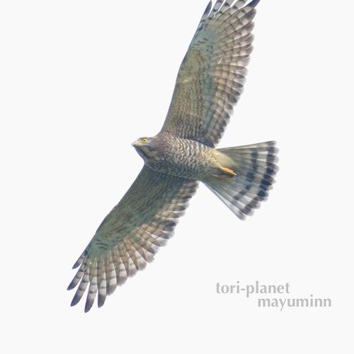 f:id:tori-planet:20161001001336j:plain