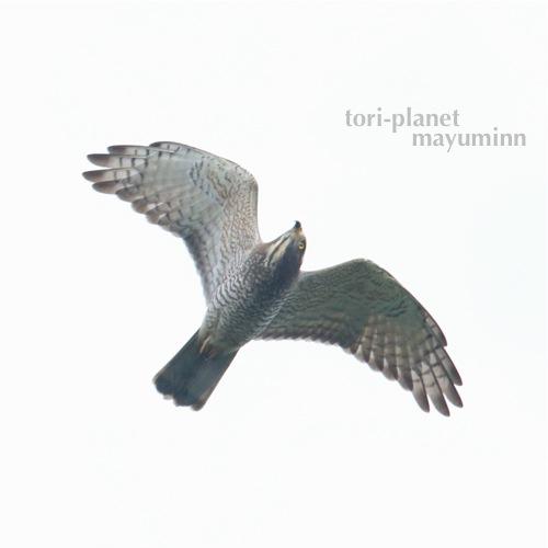 f:id:tori-planet:20161001001354j:plain