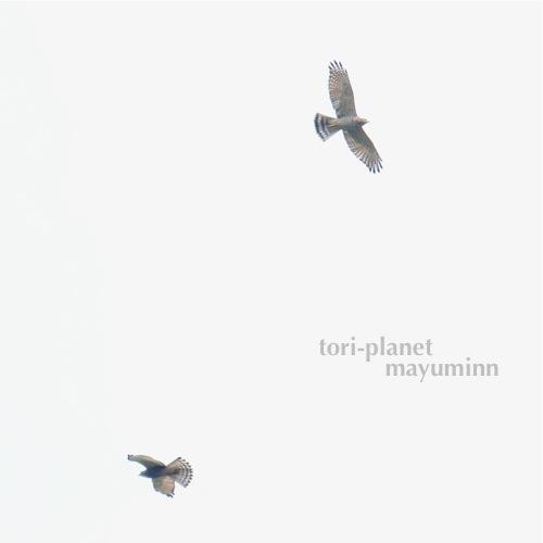 f:id:tori-planet:20161001001411j:plain