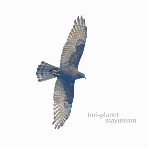 f:id:tori-planet:20161003150856j:plain
