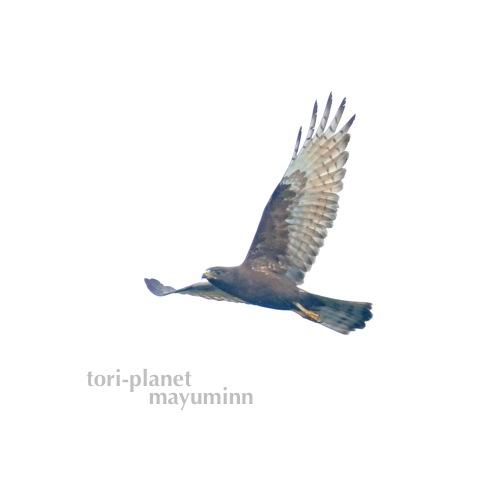 f:id:tori-planet:20161003151008j:plain