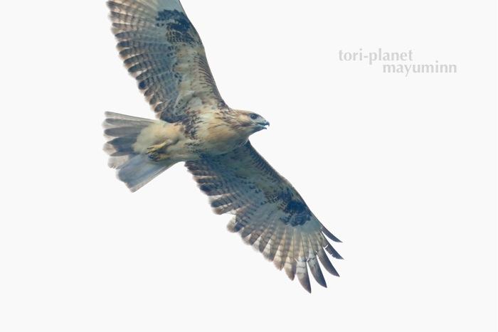 f:id:tori-planet:20161005104719j:plain