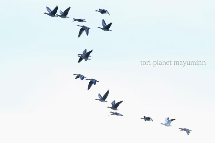 f:id:tori-planet:20161215160948j:plain