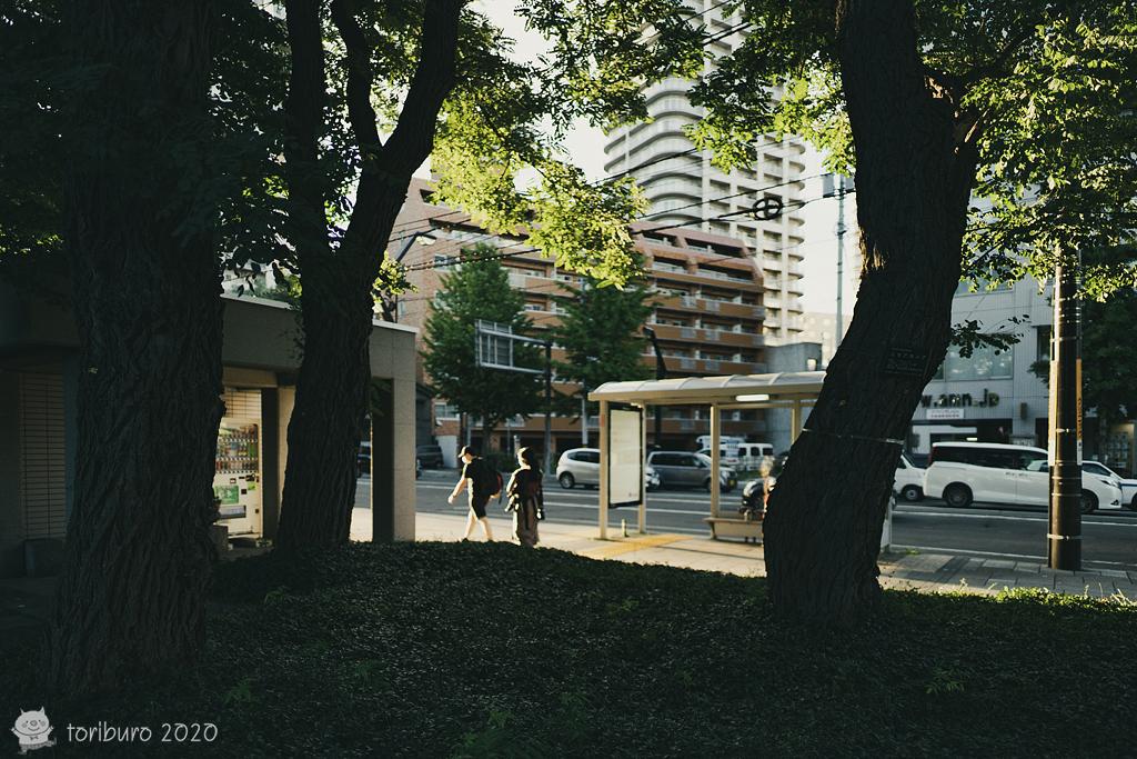 f:id:toriburo:20200908092127j:plain