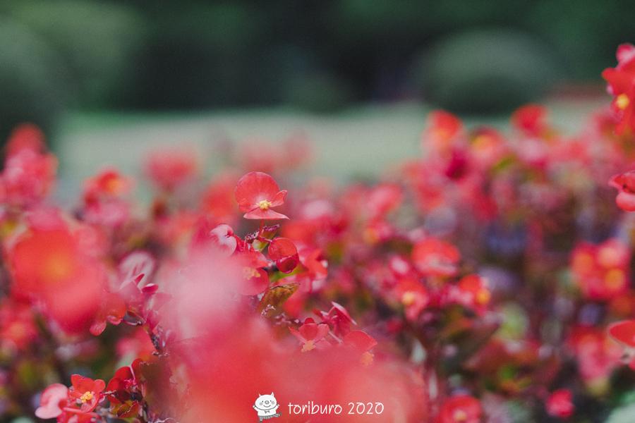 f:id:toriburo:20200918222943j:plain