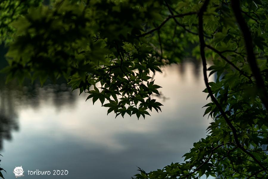 f:id:toriburo:20200924221821j:plain