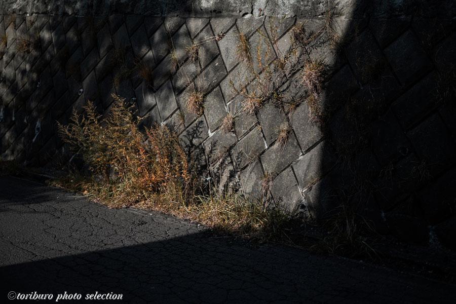 f:id:toriburo:20201027162158j:plain