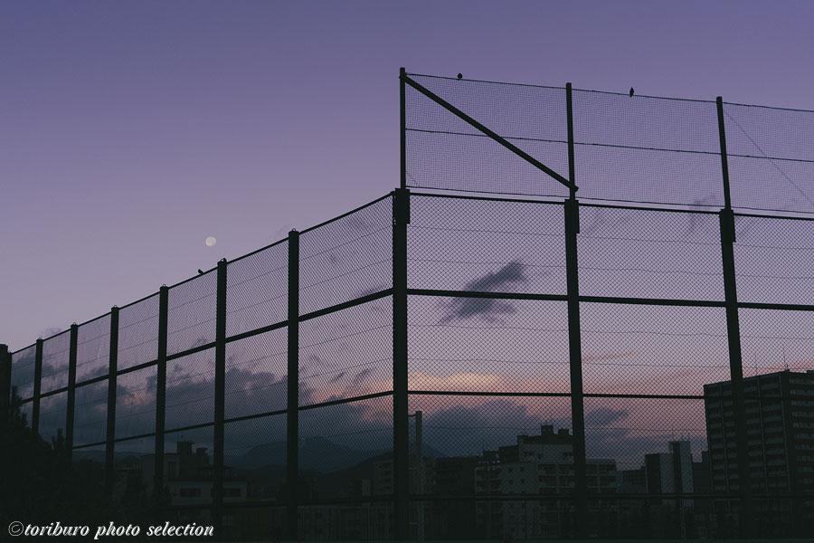 f:id:toriburo:20201103083703j:plain