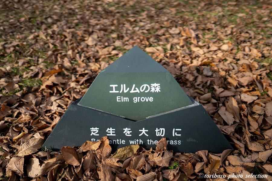 f:id:toriburo:20201118165756j:plain