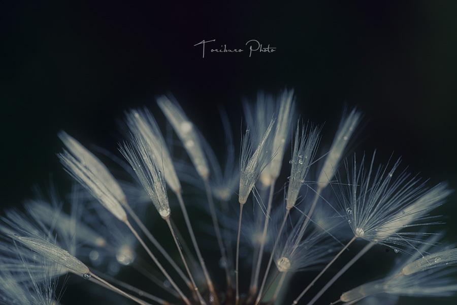 f:id:toriburo:20210528233829j:plain