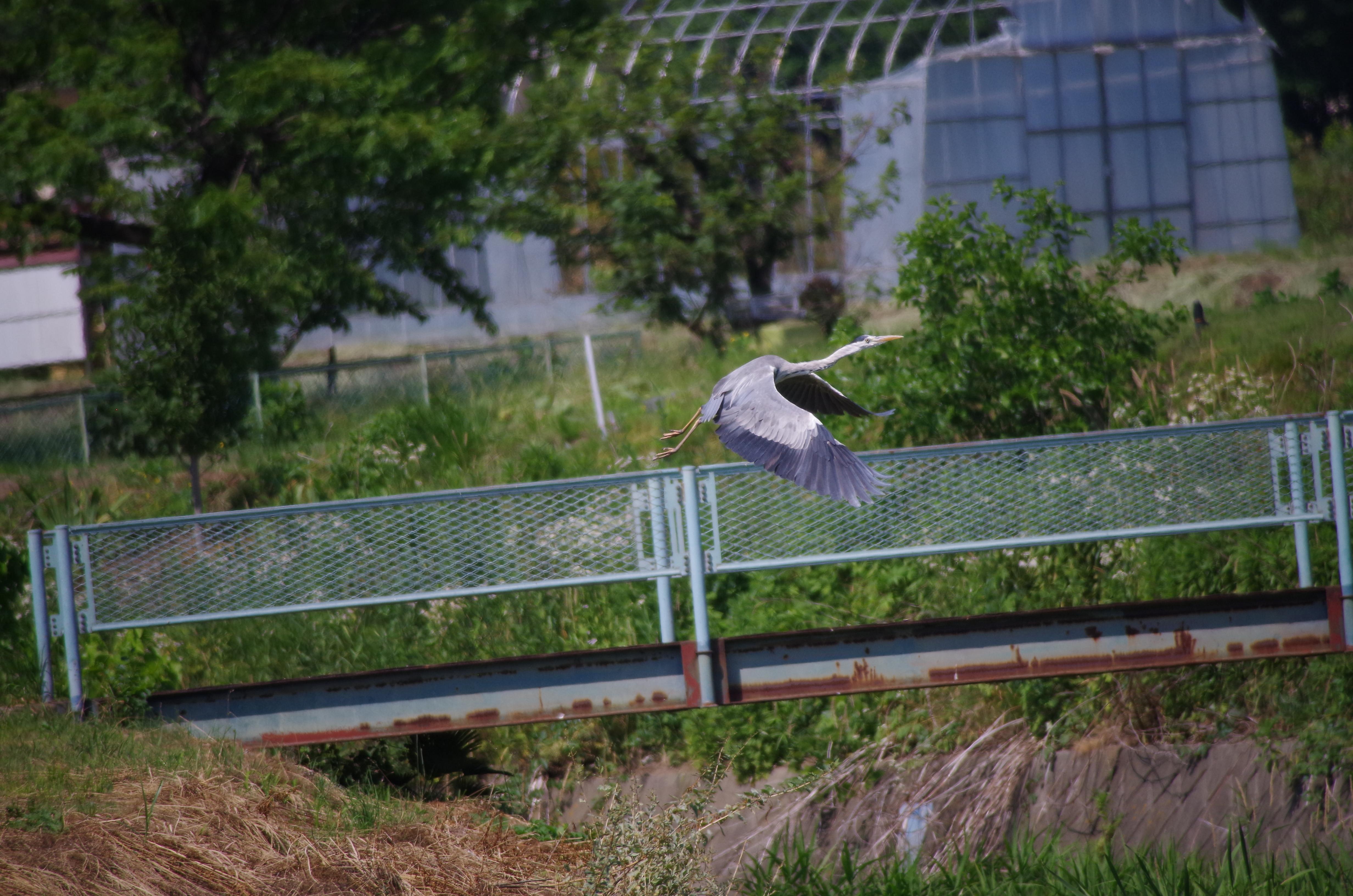 f:id:torimi-river:20170622213542j:image
