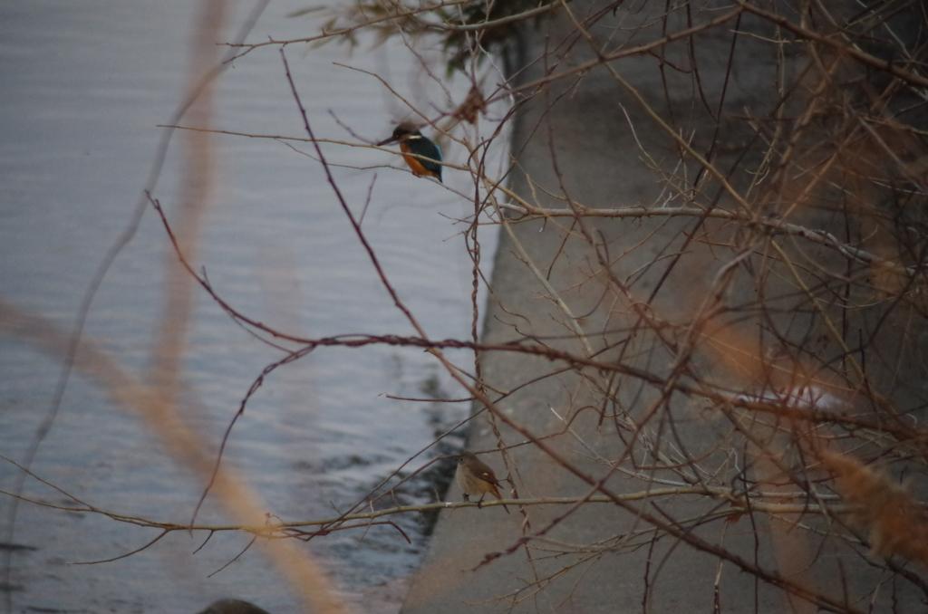 f:id:torimi-river:20180212210827j:plain