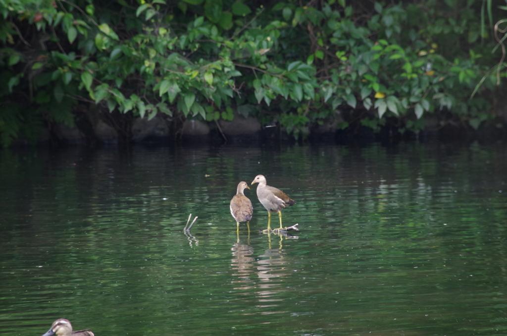 f:id:torimi-river:20180807204251j:plain