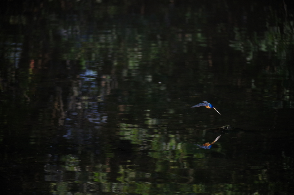 f:id:torimi-river:20181014215640j:plain
