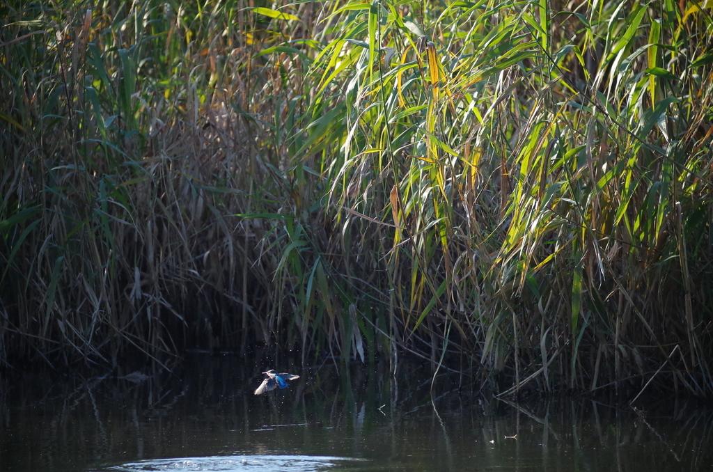 f:id:torimi-river:20181028220657j:plain