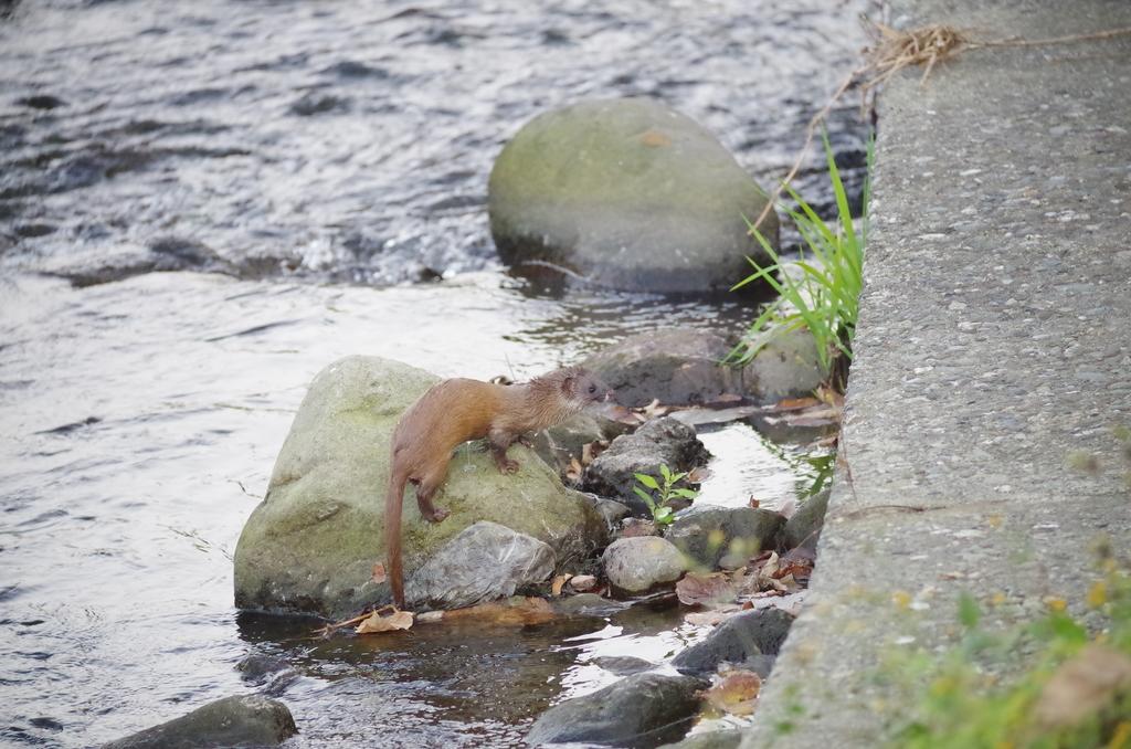 f:id:torimi-river:20181118194345j:plain