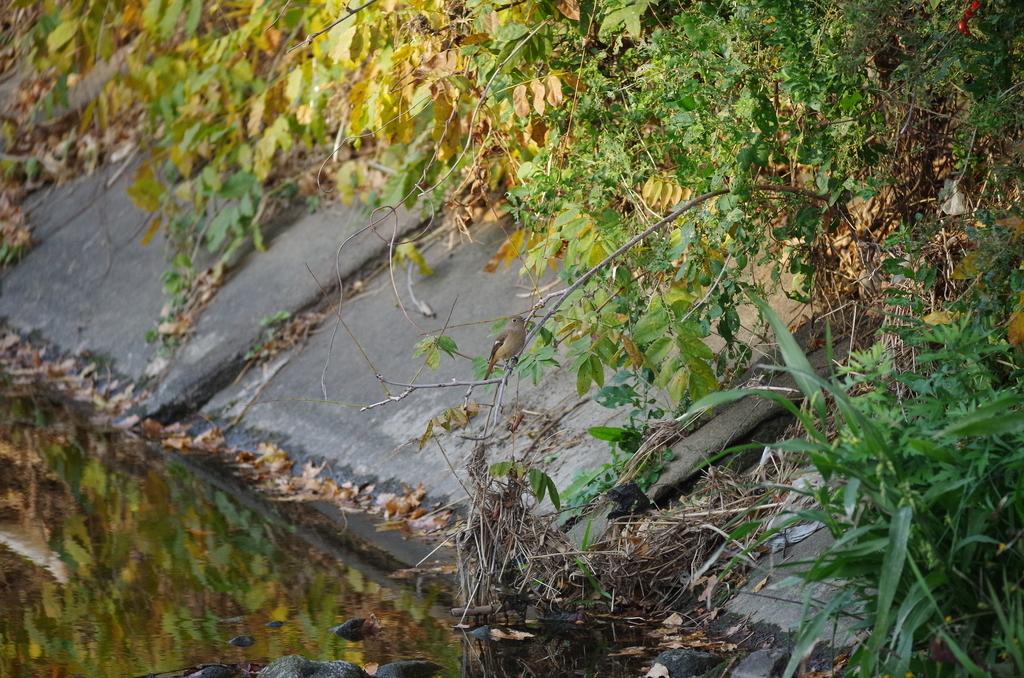 f:id:torimi-river:20181118194458j:plain