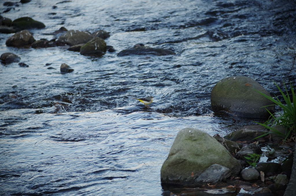f:id:torimi-river:20181202202231j:plain