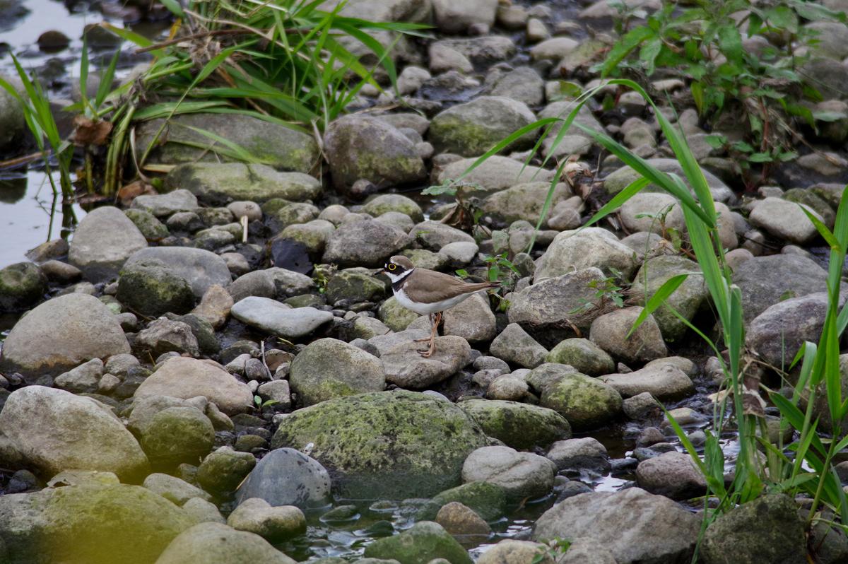 f:id:torimi-river:20190506211005j:plain