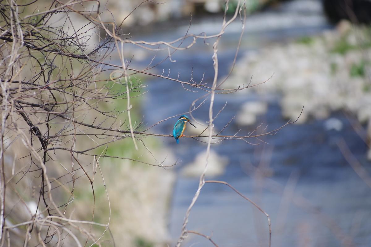 f:id:torimi-river:20200407225257j:plain