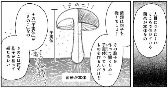 f:id:torimomo_d:20200509190457j:plain