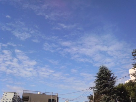 f:id:torimusi:20080920090933j:image