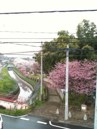 f:id:torimusi:20100407215718j:image