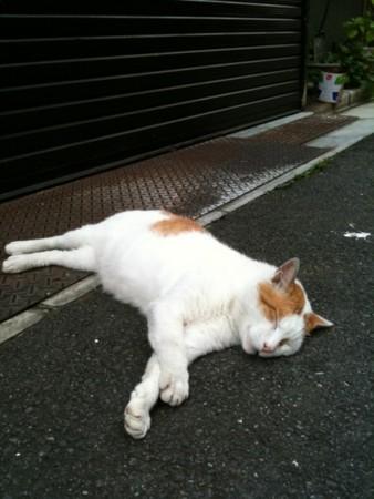 f:id:torimusi:20100710164130j:image