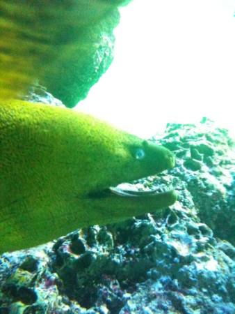 f:id:torimusi:20100908014752j:image