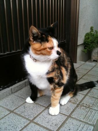 f:id:torimusi:20100928214112j:image
