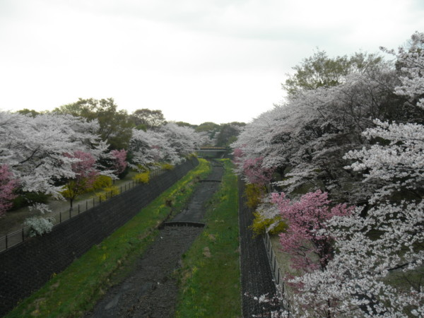 f:id:torimusi:20110413225422j:image