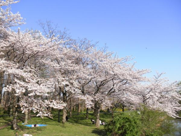 f:id:torimusi:20110413232743j:image