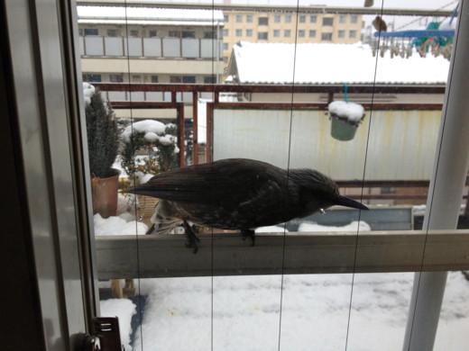 f:id:torimusi:20120304004649j:image