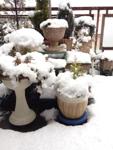 f:id:torimusi:20120304004650j:image