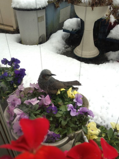 f:id:torimusi:20120325050832j:image
