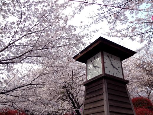 f:id:torimusi:20120412014039j:image