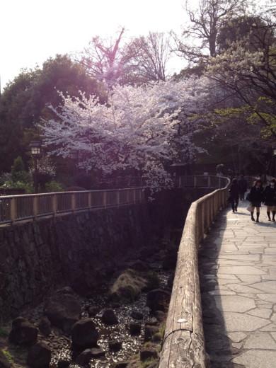 f:id:torimusi:20120412014049j:image